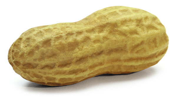 large image of Peanut